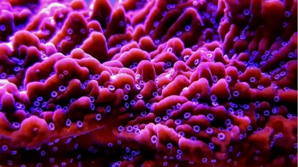 Coral Reef Aquarium Supplies – Getting Good Prices mail order corals