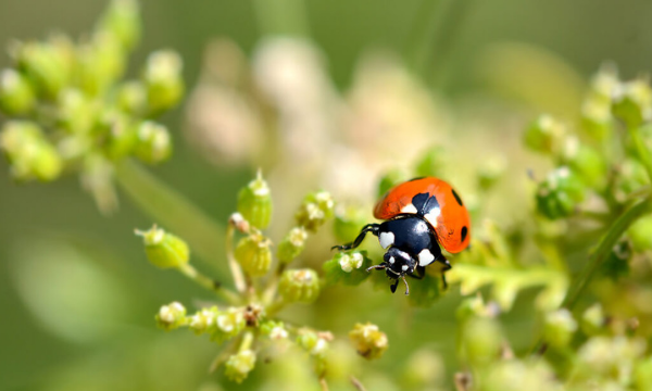 What do you need to know more about organic pest control methods?